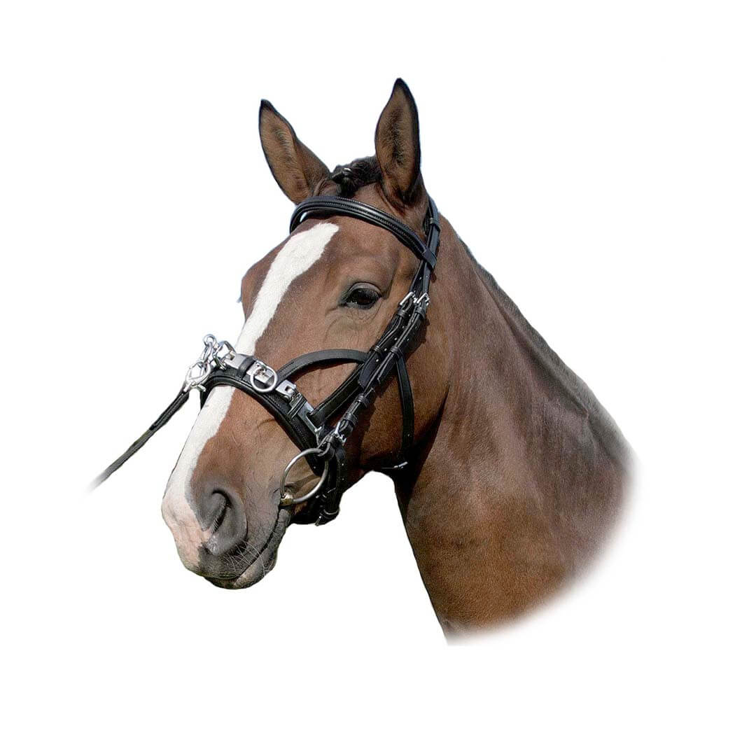 Waldhausen Wembley Leather Lunge Cavesson Bridle