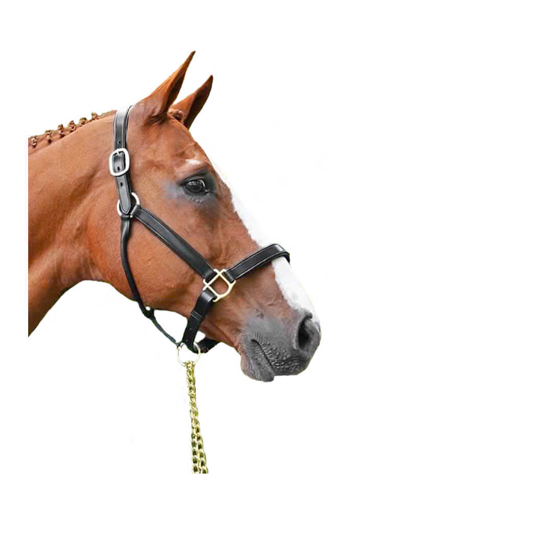 Leather Halter with Brass Fittings